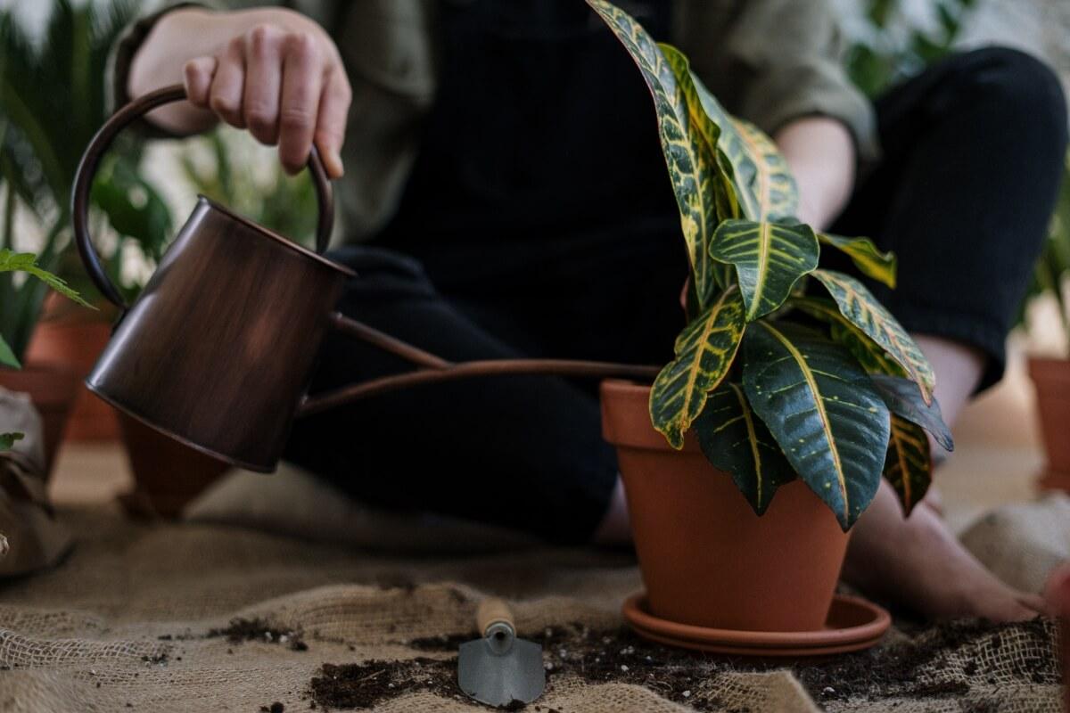 Polievanie izbových rastlín: 7 rád nad zlato, ktorých sa oplatí držať