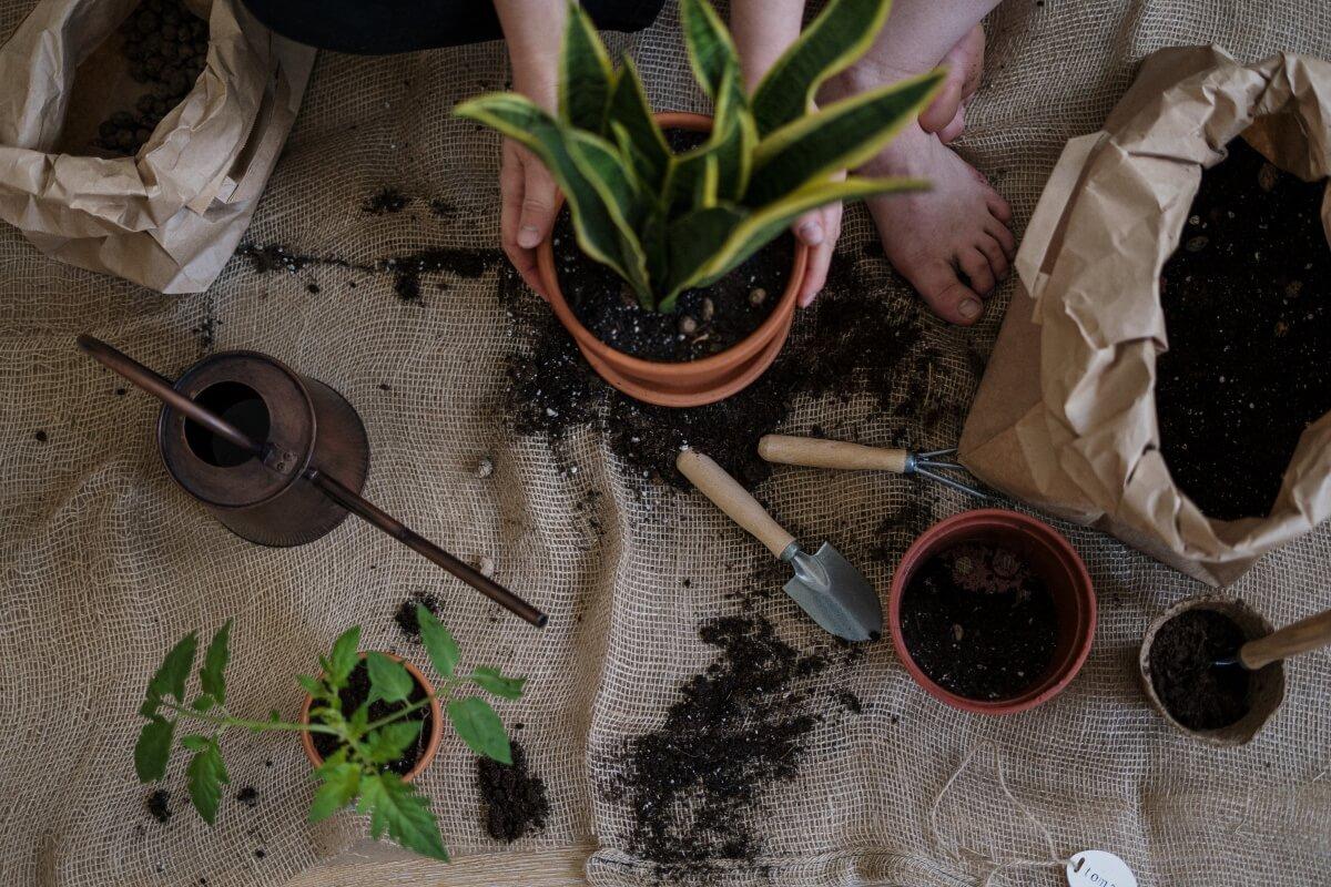 Vhodný substrát pre rastliny: Viete, aký bude vyhovovať tým vašim?