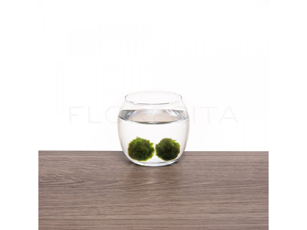 akvarium mini florecita 002
