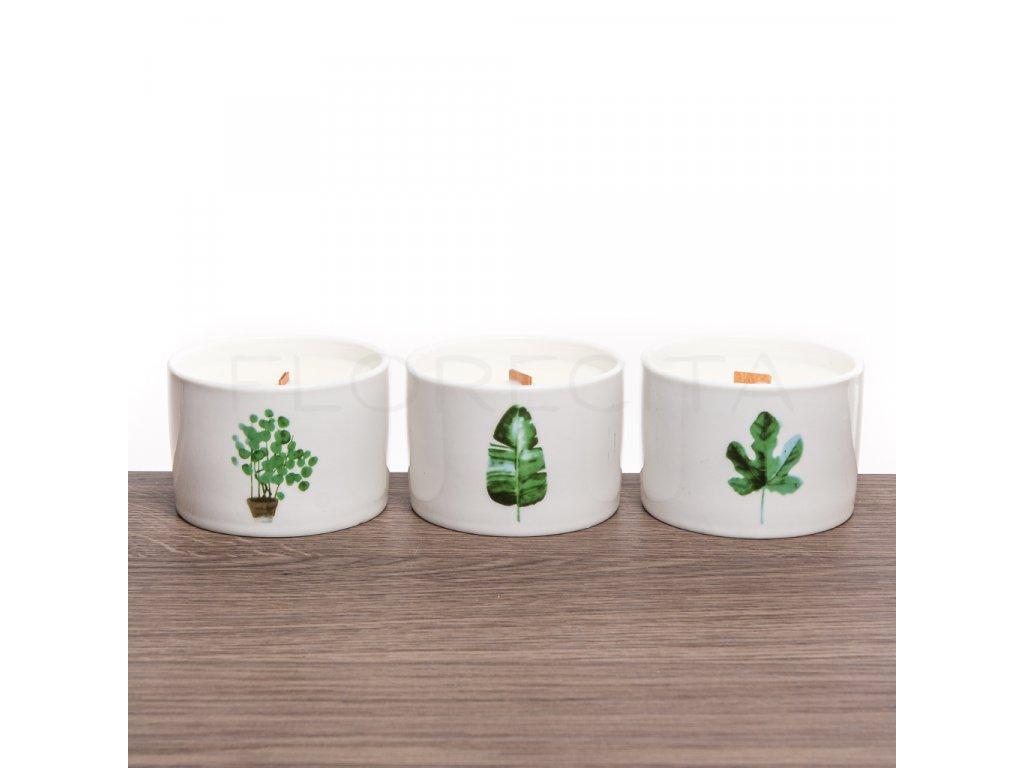 Sójová sviečka s dreveným knôtom stredná - Citrón & Zemolez