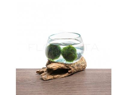 akvarium na dreve male florecita 003