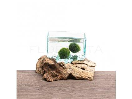 akvarium hranate na dreve florecita 004