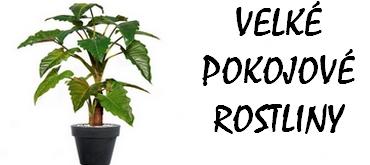 Velké pokojové rostliny