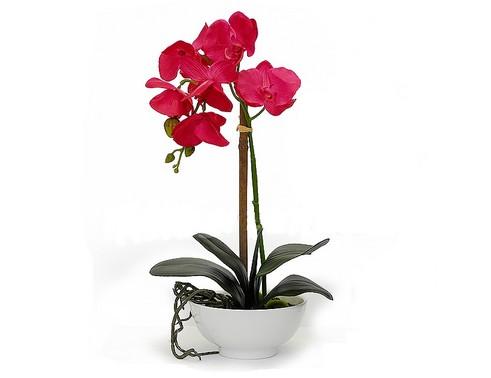 pokojové rostliny malé
