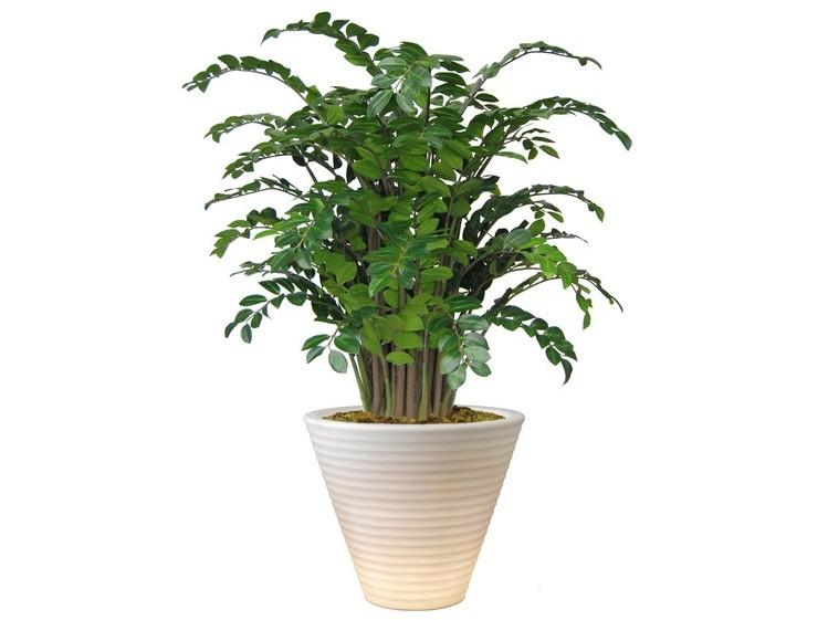 pokojové rostliny velké