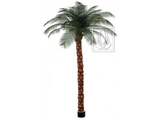 Umělá palma Phoenix (300cm)