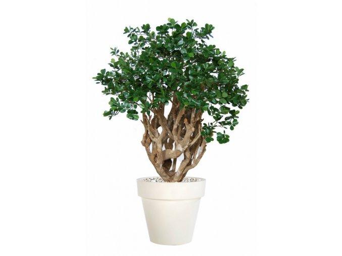 Umělý strom Fikus Panda Robusta (160cm)
