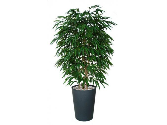 66447 longifolia boschetto 180 cm green 1058001