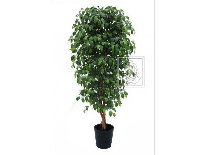 Umělý strom Fikus Benjamin (210cm)