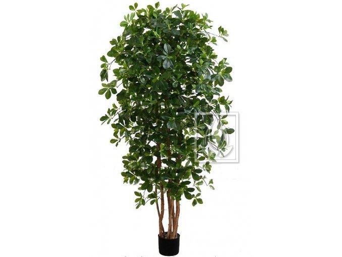 Umělý strom Fikus Orient (Varianta 100cm)