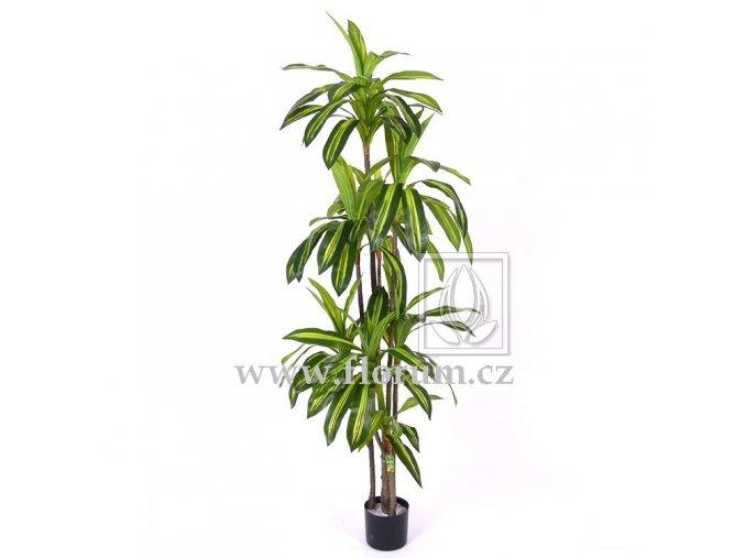 Umělý strom Draceaena Massangeana (200cm)