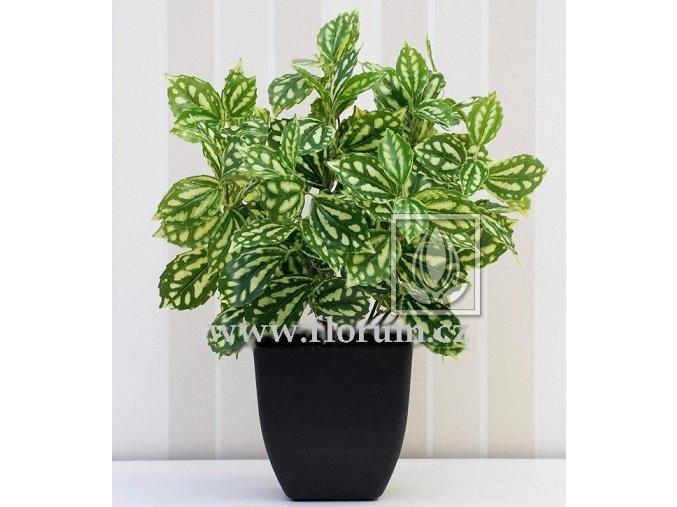Umělá rostlina Peperonia (35cm) vario