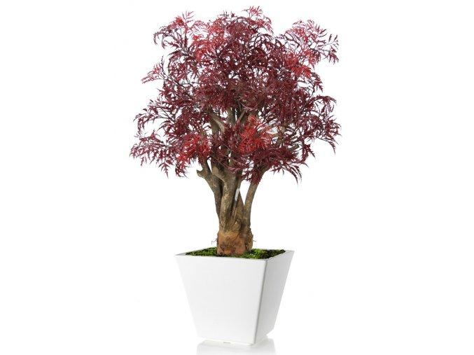 Umělý strom Aralia Robustina (90cm) burgundy  arálie