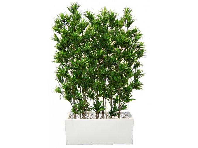 Umělý strom Dracaena Reflexa Fence (180cm)  zelená nebo Vario