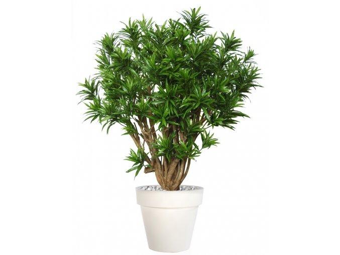 Umělý strom Dracaena Reflexa Robusta (170cm)  zelená nebo Vario