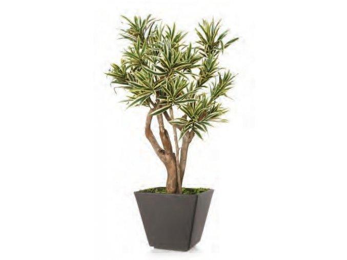 Umělý strom Dracaena Reflexa Robustina Vario (90cm)  zeleno-žlutá