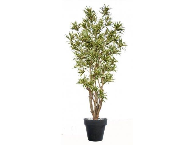 Umělý strom Dracaena Reflexa Malabar (220cm)  zelená nebo Vario