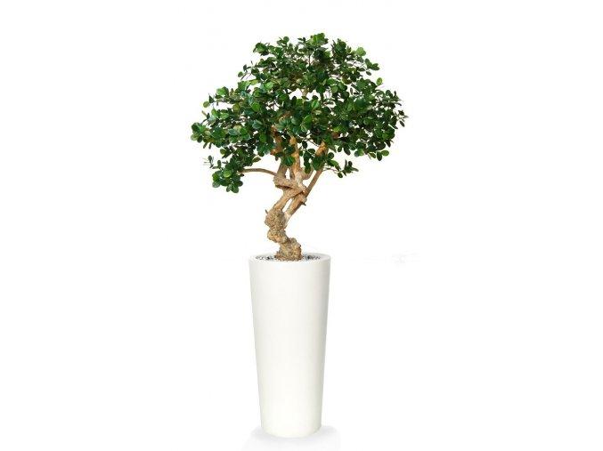 Umělý strom Fikus Panda Crown (150cm)