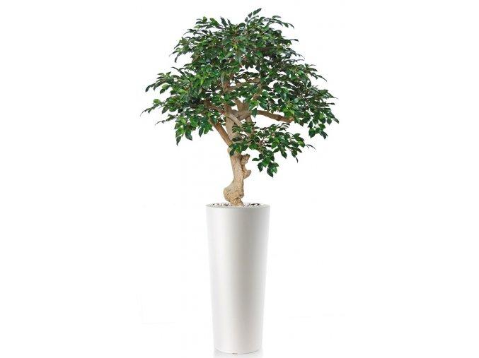 Umělý strom Fikus Retusa Crown (150cm)