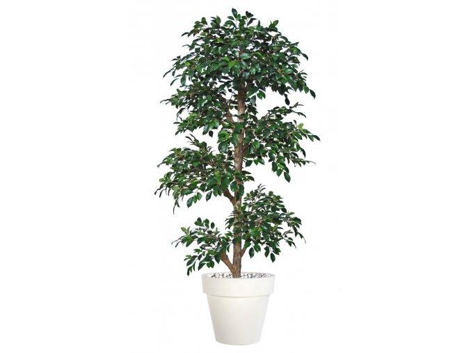 Umělý strom Fikus Retusa Multistep (180cm)