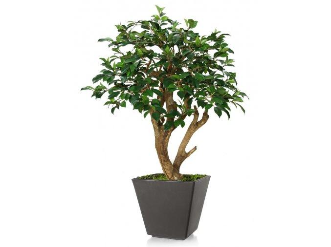 Umělý strom Fikus Retusa Robustina (90cm)
