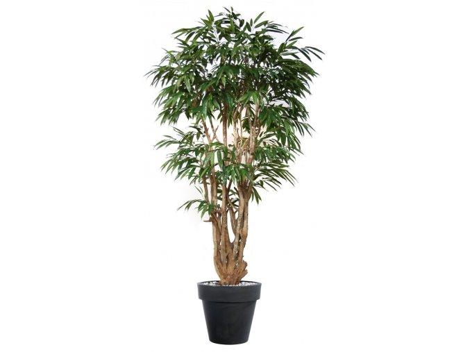 Umělý strom Longifolia Malabar Lux (250cm)
