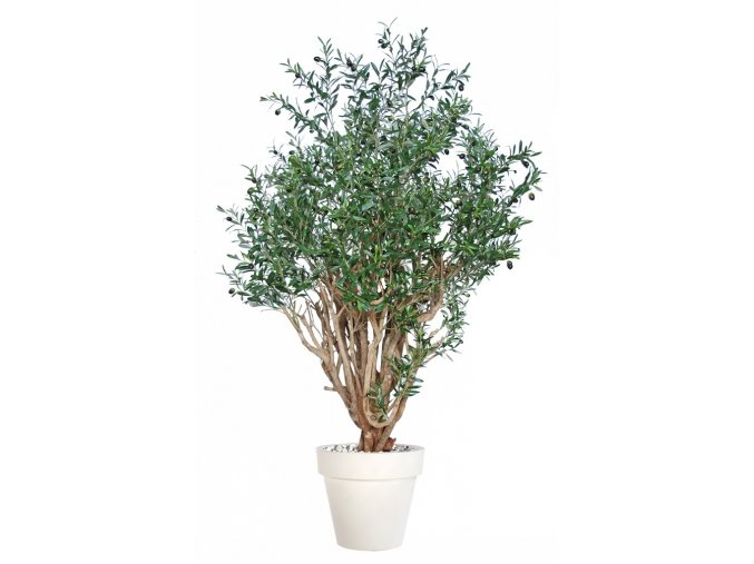 Umělý strom Olive Robusta (200cm)  olivovník