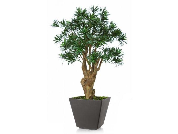 Uměly strom Podocarpus Robustina (90cm)  nohoplod