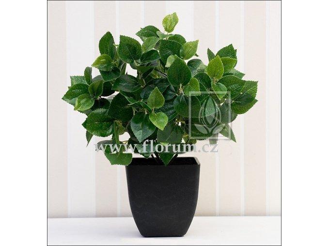Umělá rostlina Peperonia (35cm) zelená