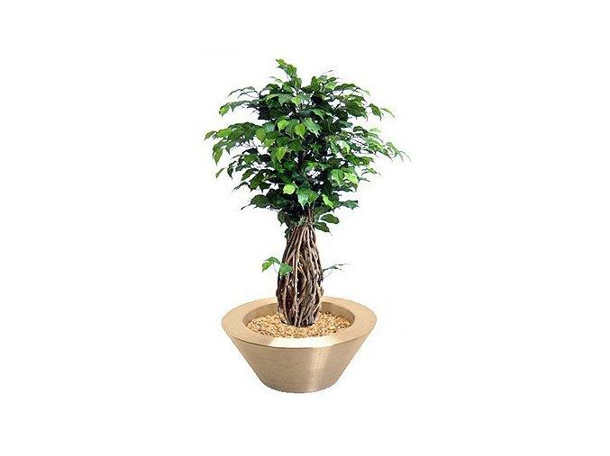 Umělý strom Fikus Liana (100cm)
