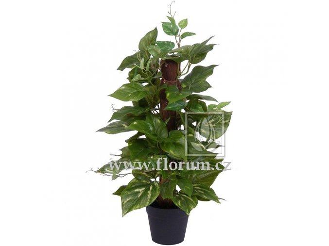 Umělá rostlina Pothos Sisal (50cm)