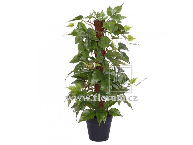 Umělá rostlina Réva Sisal (50cm)