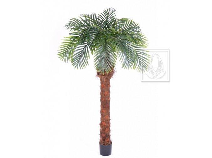 Umělá palma Phoenix (180cm)