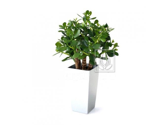 Umělá rostlina Crassula (40cm)