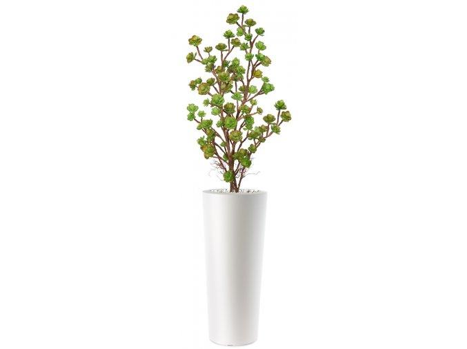 Echeveria Plant Lux 180 cm Multicolor V5421M01