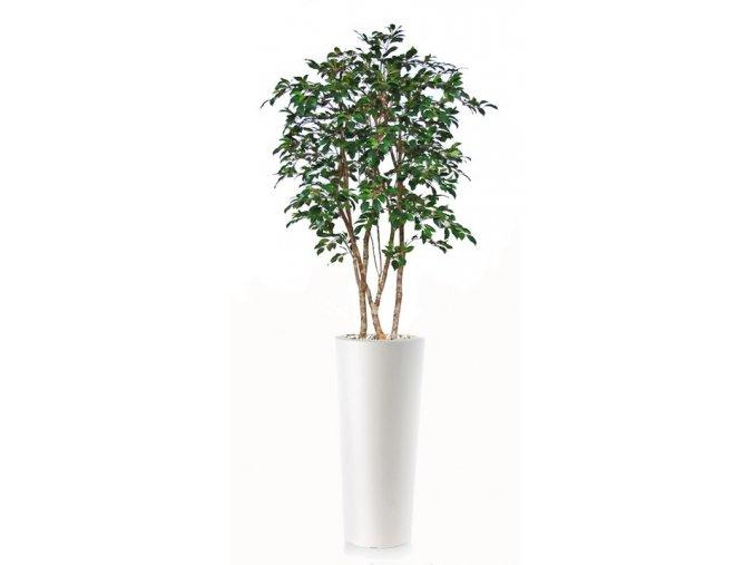 ficus retusa natural style 150 cm green 1064005