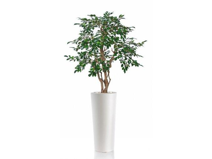 ficus retusa stylish 130 cm green 1064007