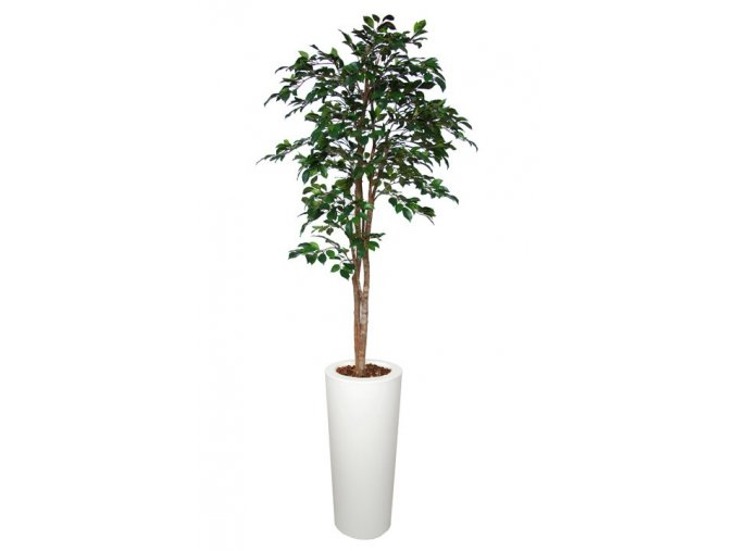 30260 ficus retusa tree 150 cm green 1064006