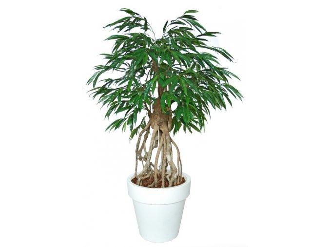 96408 longifolia everglades 160 cm green 1058023