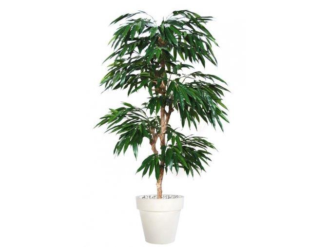 Umělý strom Longifolia Multistep (výška 220cm)