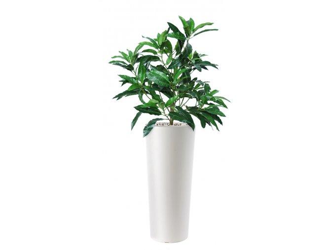 Mango Bush 130 cm Green V1069001