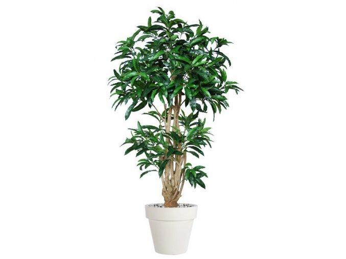 Umělý strom Mango Malabar (výška 220cm)