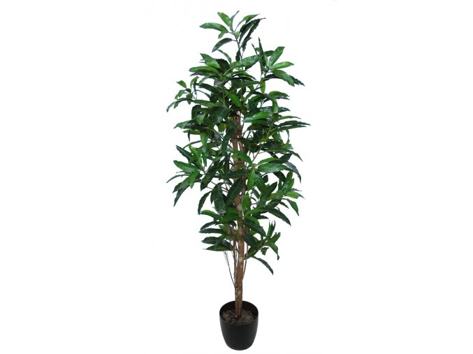 Mango Tree 170 cm Green V1069013