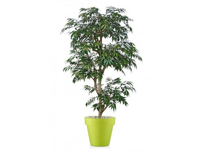 48776 myrsifolia multistep 180 cm green 1068002 2