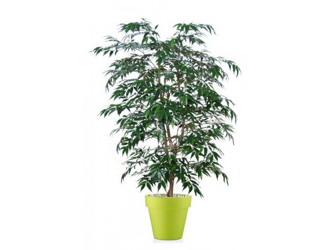 39436 myrsifolia natural style 150 cm green 1068004