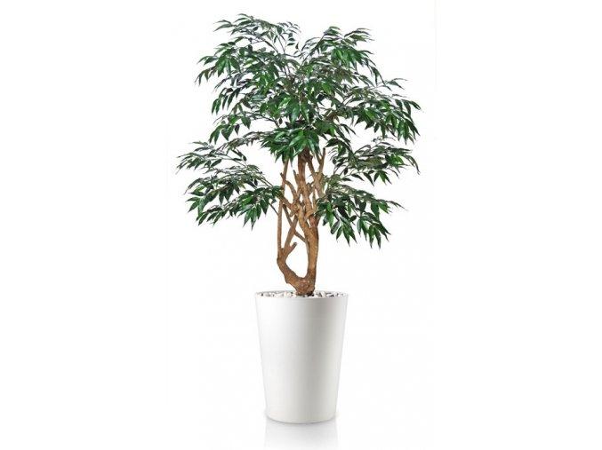 92855 myrsifolia stylish 130 cm green 1069006 3