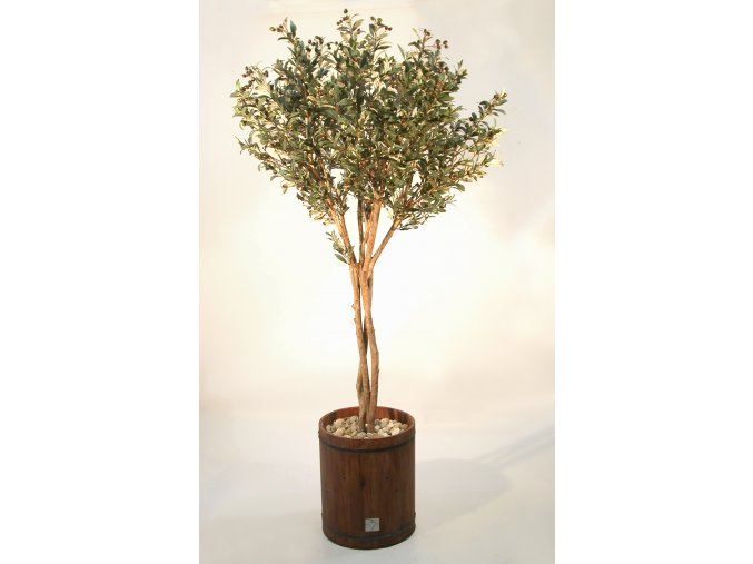 Olive Gigantea 220cm V 1024A07