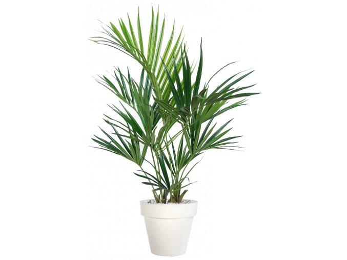 Kentia Palm 160 cm Green V5434GRN