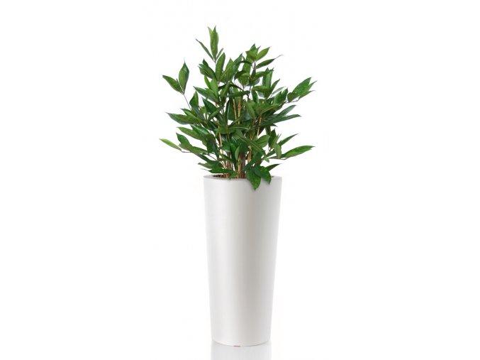 Dracaena Surculosa 110 cm Green V5432GRN