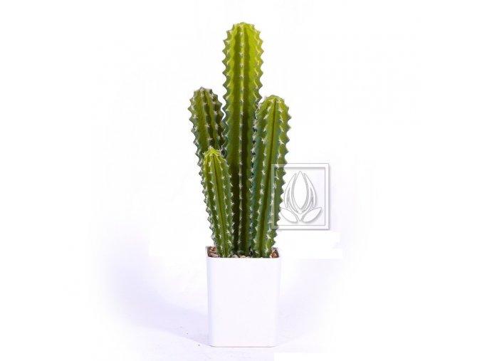 kaktus sloupovy 55cm
